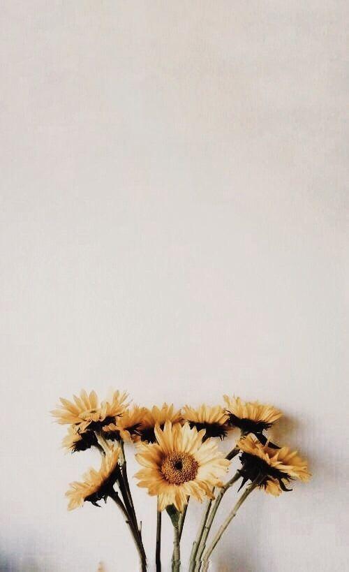 Sunflower Vintage Mediterranean Lifestyle In 2019 Screen