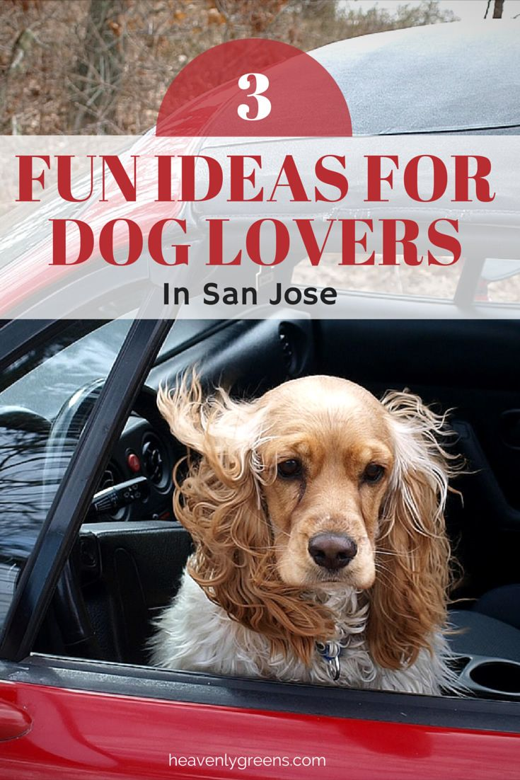 3 Fun Ideas For Dog Lovers in