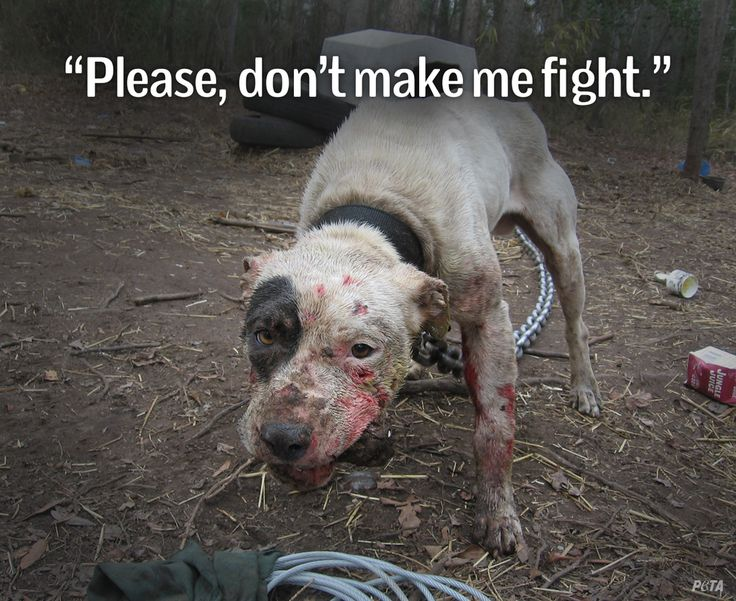 Dog fighters are disgusting, vile, pathetic filth.  Get a job, losers.