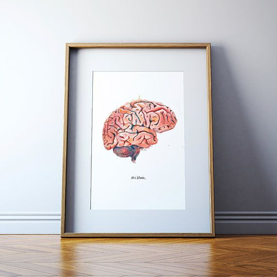 The Human Brain Sagittal View Watercolor Print  door LyonRoad