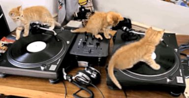cats dj GIF by Product Hunt