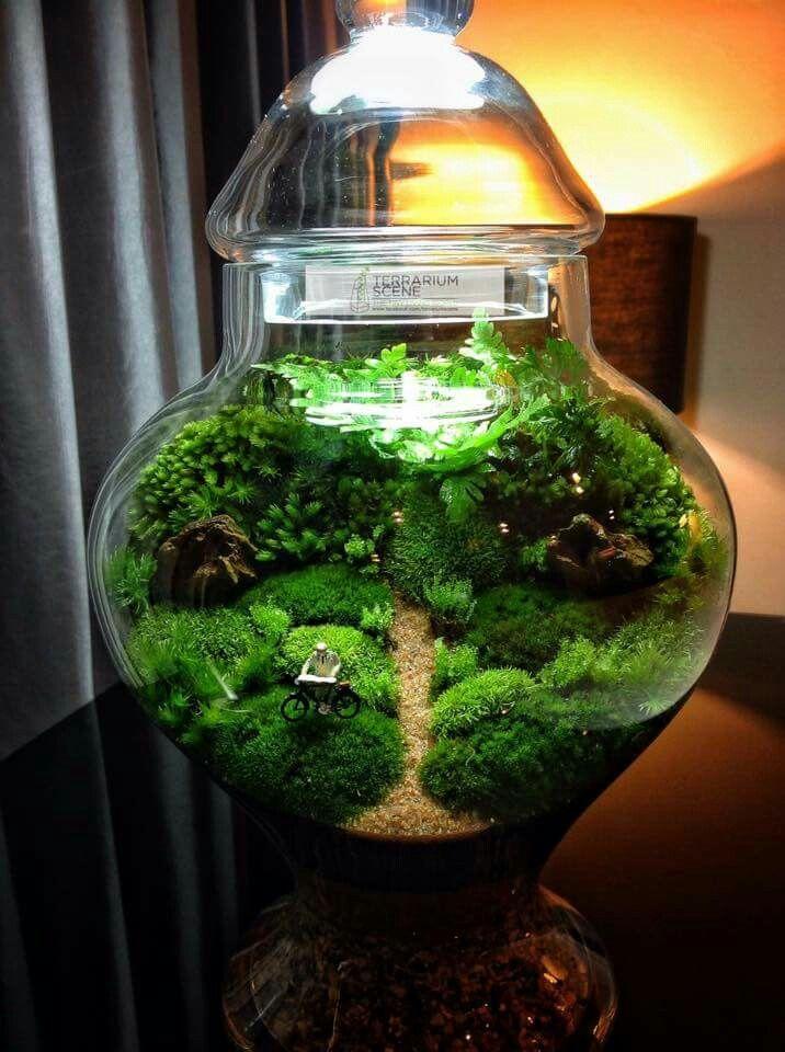 Les 128 meilleures images du tableau terrarium plantes sur for Pflanzen im glas