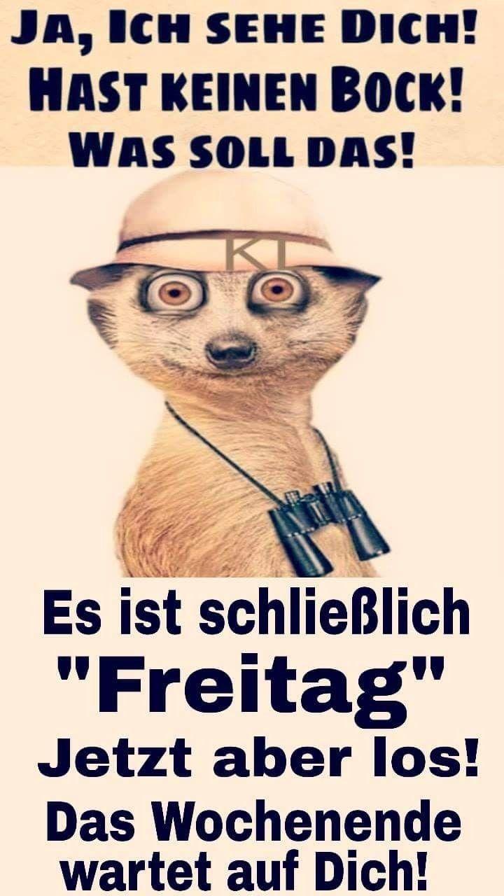 Pin Von Urso Mario Auf Witzig Freitag Spruche Lustig Freitag