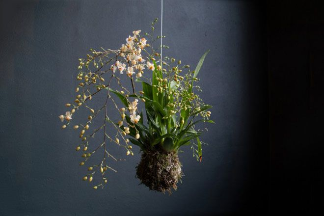stringplants.com | these plant arrangements are called string plants this concept was