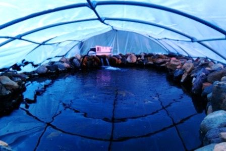 Best 25 pond covers ideas on pinterest fish ponds for Koi pool cover