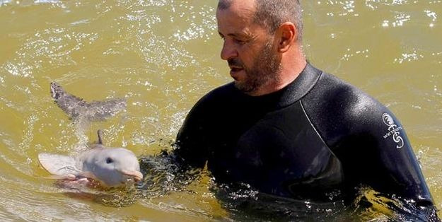Oh Hai, Baby Dolphin. | 20 Animal Babies That Are Cuter Than People Babies