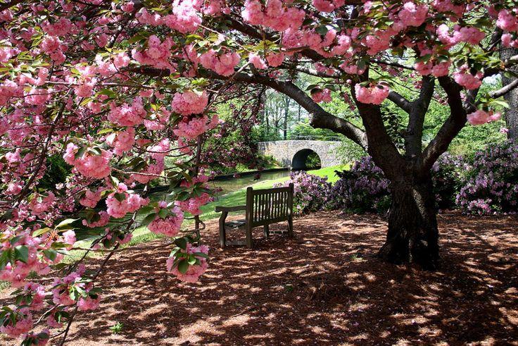 Norfolk Botanical Garden 6700 Azalea Garden Road Norfolk