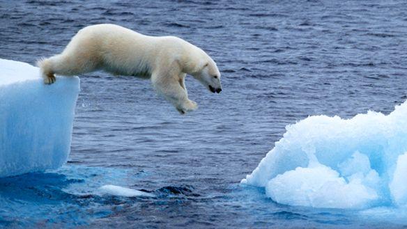 Polar bears and global warming essays