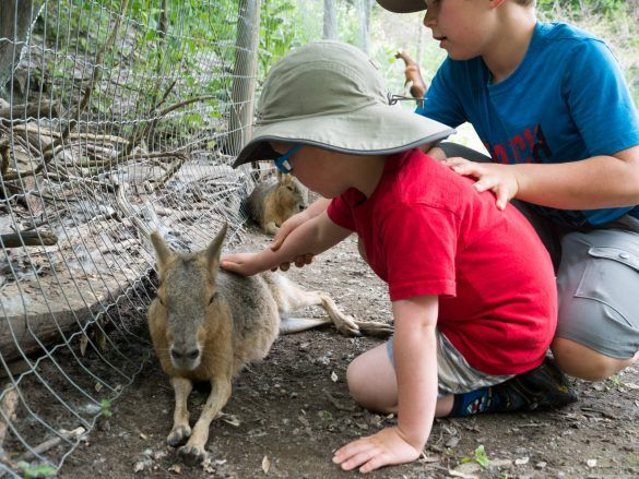 5 Tips for Visiting Kangaroo Creek Farm in Lake Country, BC – Backwoods Mama