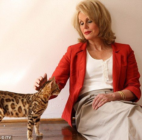 Fabulous felines: Joanna meets a Bengal cat for her new documentary