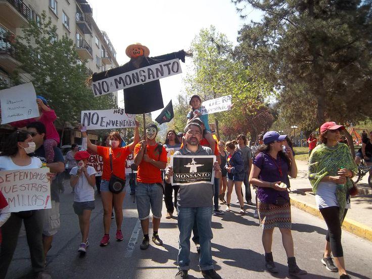 MARCHA MUNDIAL CONTRA MONSANTO   No Monsanto #MarchAgainstMonsanto #MAM #O12 Chile #semillaslibres
