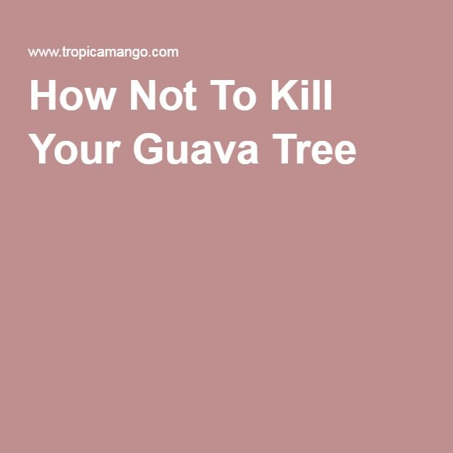 How Not To Kill Your Guava Tree