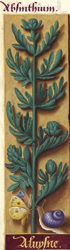 """Aluysne - Absinthium (Artemisia absinthium L. = absinthe aluine -- """"aluysne/aluine"""" viennent de """"aloen"""", ancienne forme de """"aloes"""", l'amertume de l'absinthe ayant été comparée à celle de l'Aloe vulgaris Lk) -- Grandes Heures d'Anne de Bretagne, BNF, Ms Latin 9474, 1503-1508, f°101v"""