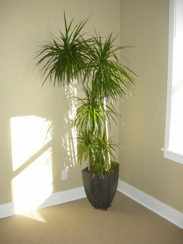 38 Best Images About Indoor Tropical Plants On Pinterest
