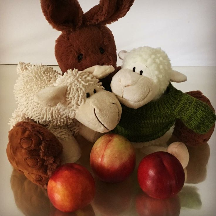 Meet one of our cute rabbits & two of our sheep   These soft loveable characters can be added to any of our fruit hampers or fruit baskets... Give the gift of fruit to the one you love!   #baby  #fruitgifts #teddybear #teddy #valentines #valentinesday #love #fruithampers #fruithamper #fruitbaskets #fruitbasket #bemyteddybear #cupid #life #quote #quotes #cuddly #cute #easter #happyeaster #easter2016