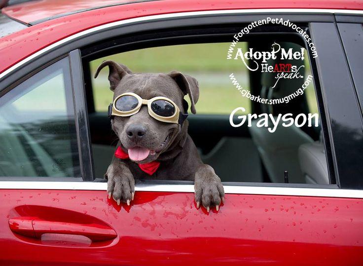 Rottweiler puppies houston texas