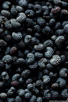 Black | 黒 | Kuro | Nero | Noir | Preto | Ebony | Sable | Onyx | Charcoal | Obsidian | Jet | Raven | Color | Texture | Pattern | Poppy #seeds.