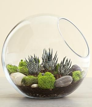 Modern Succulent Terrarium...love these. Wonderful way to bring some garden color to a small minimal space without the clutter.