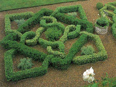 knot garden of boxwood