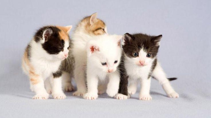 Four Kitten