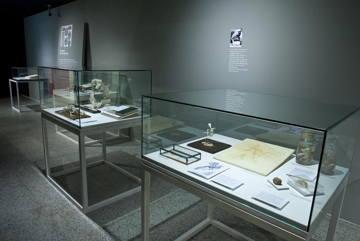 Vitrinas de la exposición con contenido bibliográfico procedente de la colección particular de Juan Luis Arsuaga.