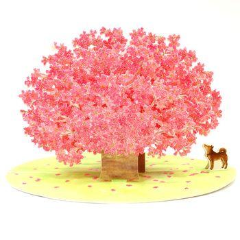 満開の桜と柴犬は、日本だけの特別な風景です。入学・卒業シーズンに。
