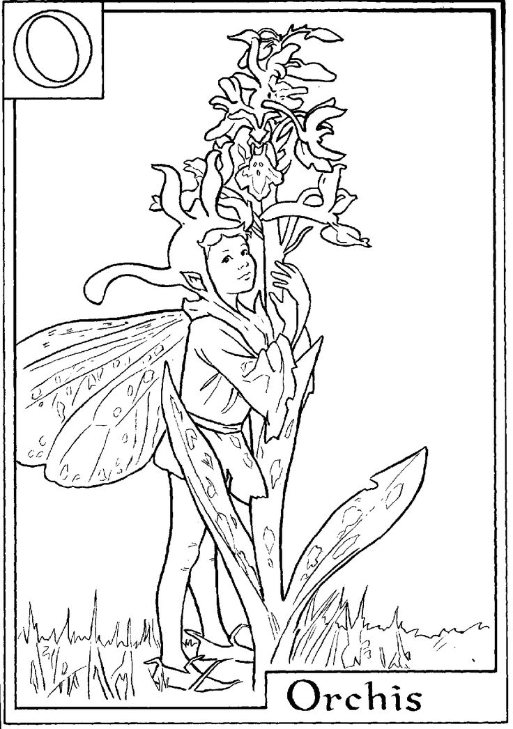 letter o for orchis flower fairy coloring page nature coloring pages fairy coloring pages flower fairies coloring pages free online coloring pages and