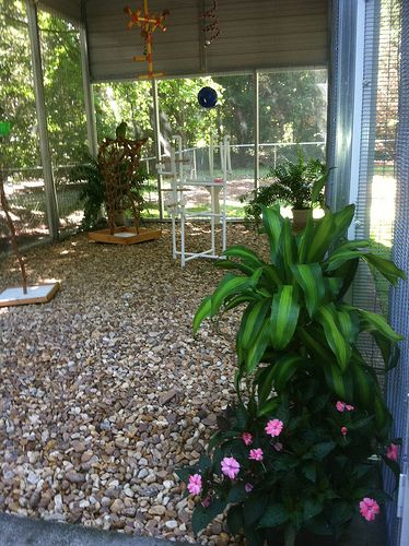 1000 ideas about bird aviary on pinterest diy bird cage for How to build your own house in florida