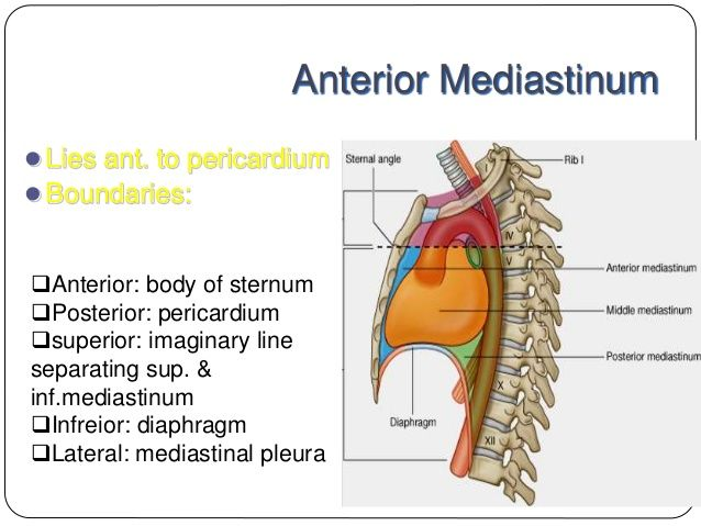 Mediastinum anatomy, location, cavity, organs, function ... |Superior Mediastinum Dissection