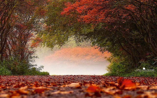 Arc by larsvandegoor.com, via Flickr