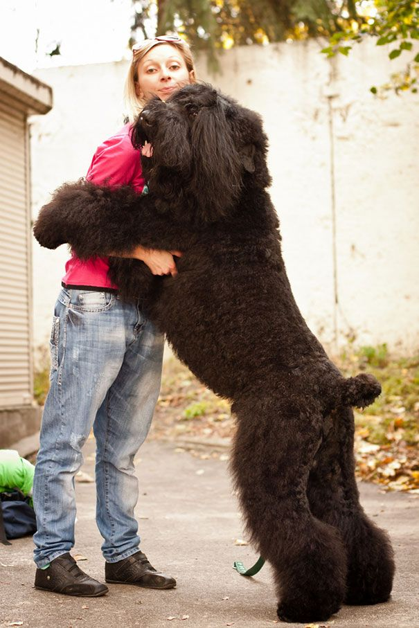 26 Dogs Hugging Their Owners