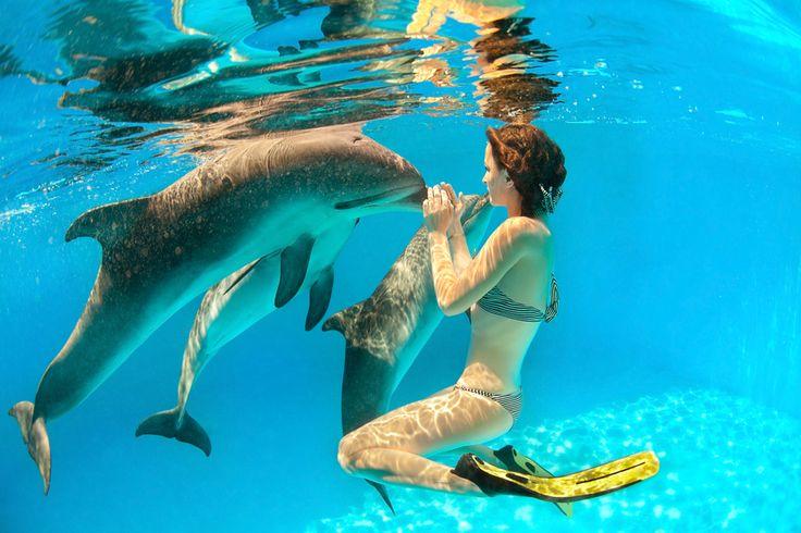 How Dolphins can Detect Human Tumors on KOSLOPOLIS http://koslopolis.com