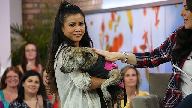 Give a Dog a Home, Adopt Today: Brenda
