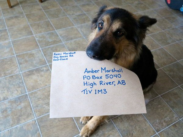 Contact Info & Fan Mail - Amber Marshall