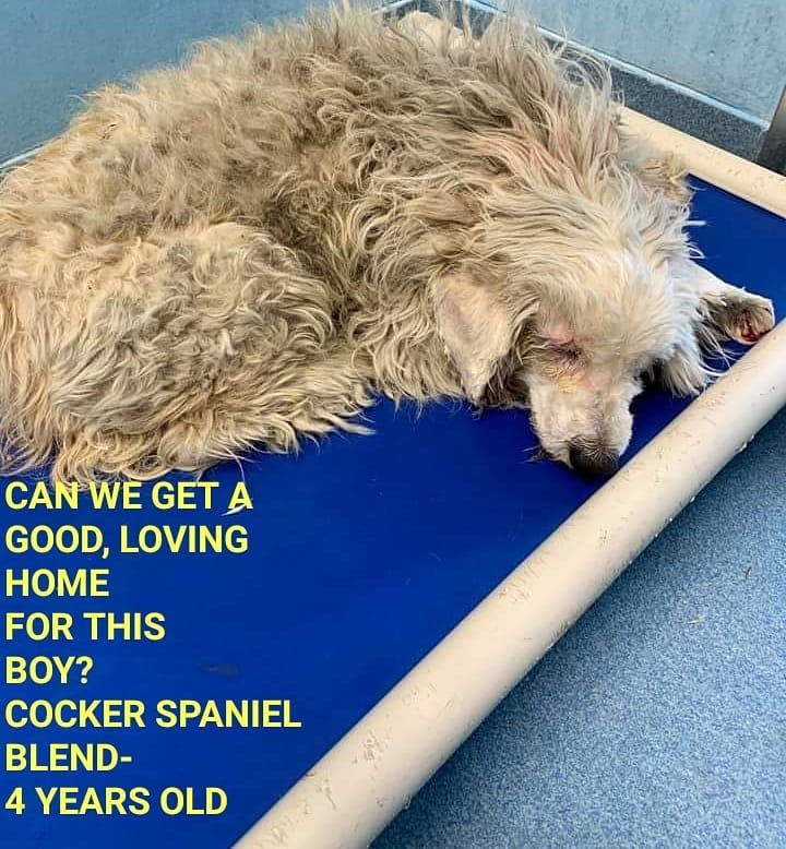 5 14 19 No Name A5277681 Baldwin Park Acc Baldwin California 626 962 3577 Available 5 19 19