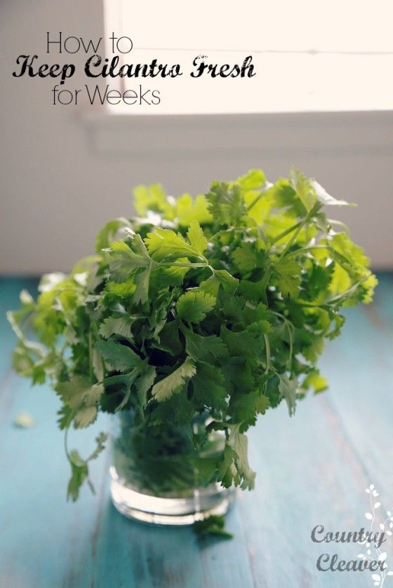 How to Keep Cilantro Fresh for Weeks!! - www.countrycleaver.com