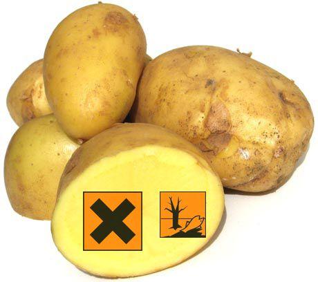 PATATE: un pericolo sulla tua tavola? Ci sono patate e patate, scopri come difenderti dal grande inganno che nascondono: http://www.miglioriamoci.net/patate-pericolo/