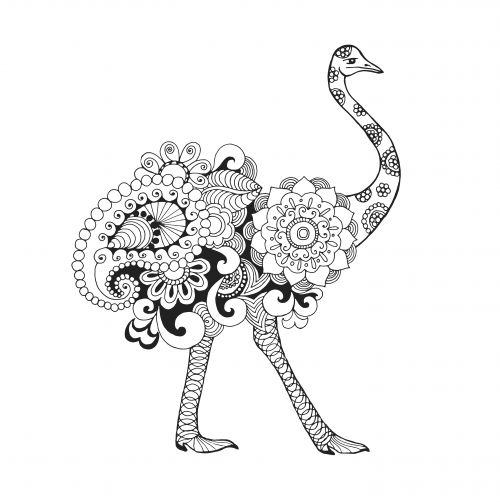i say color an ostrich today animal coloring pagesadult