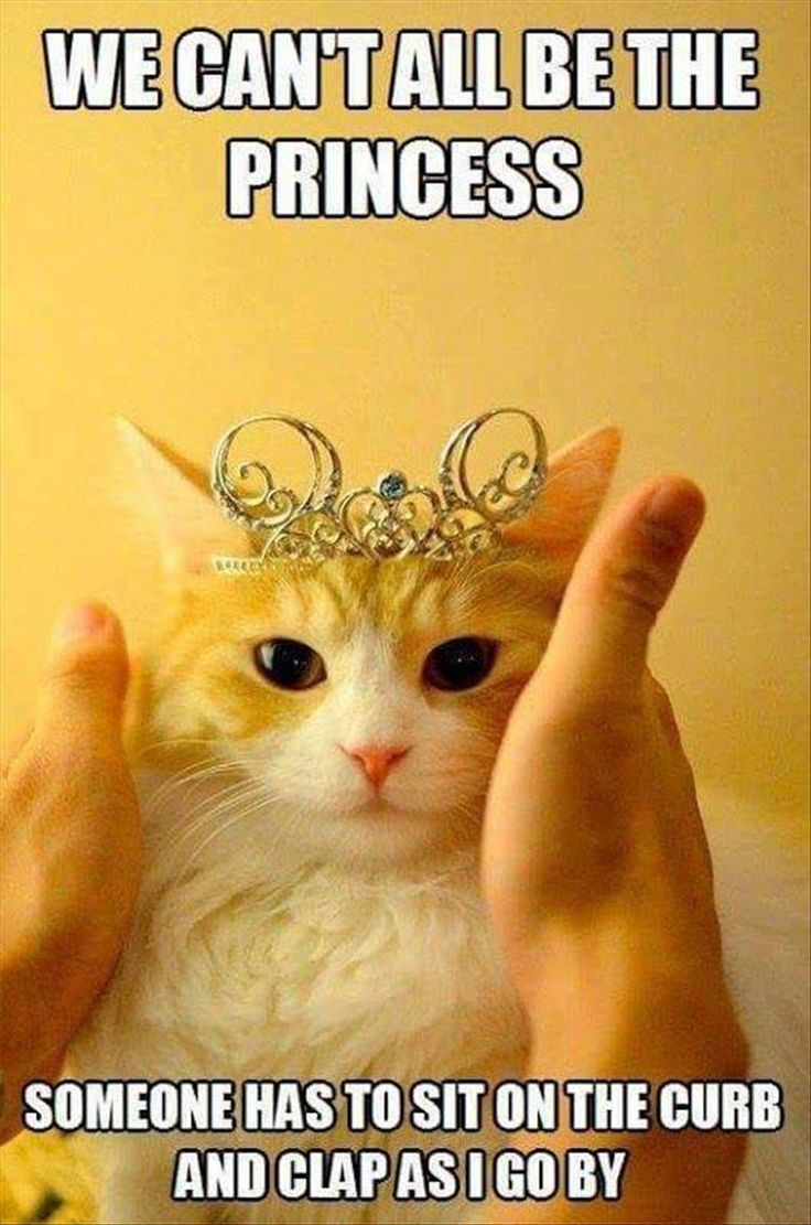 Princess | Cat | Funny Animal Pictures