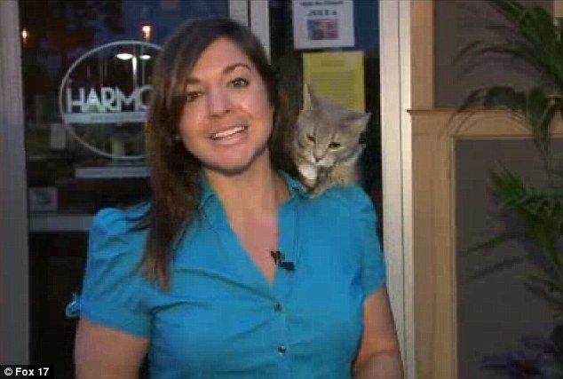 Getting comfortable: The cat made its appearance as it peeped its head from behind Ms DiDonato's slowly . . . Grand Rapids, MI  T.V. News Reporter, FOX17 News