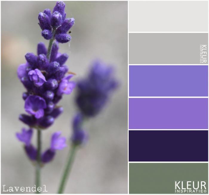 LAVENDEL - Kleurenpalet paars / lila deze combineren mooi met grijs en vaal groen.