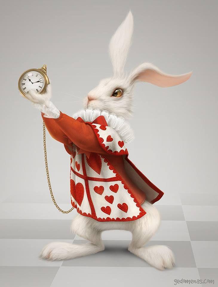 Conejo Blanco!
