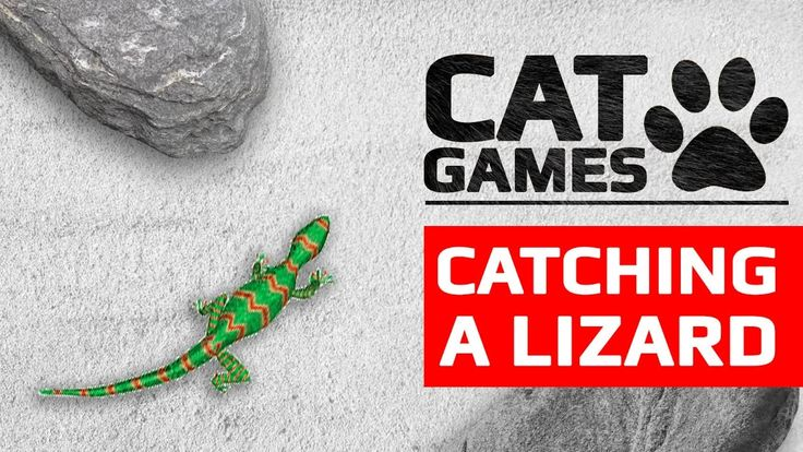 CAT GAMES - CATCHING A LIZARD (VIDEOS FOR CATS TO WATCH) 60FPS