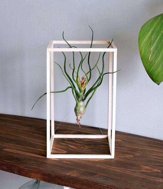 Life Boxed In Air Plant Minimalist Art Desk Wood Sculpture Tillandsia Home Decor P Products Plants Display