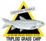 Triploid Grass Carp