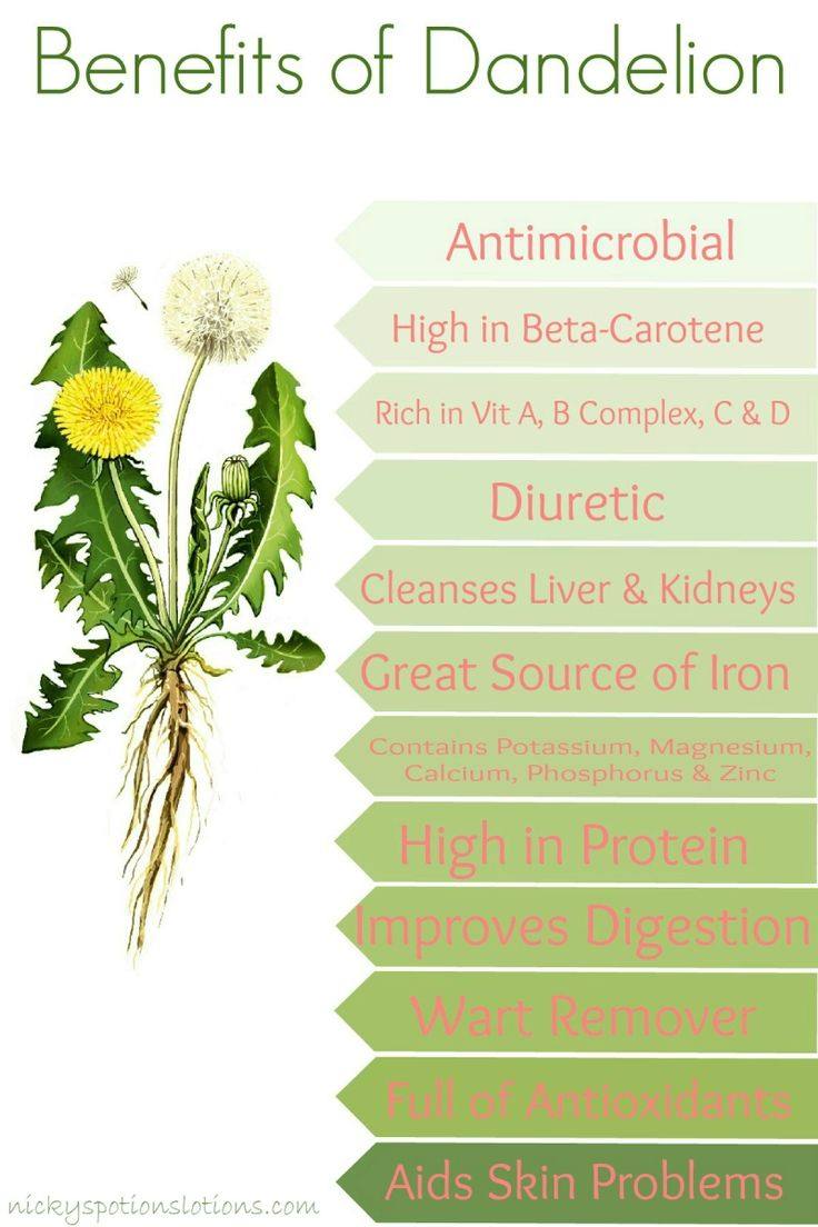 Nicky's Potions & Lotions - Benefits of Dandelions Infograph plus recipes that sound fun!