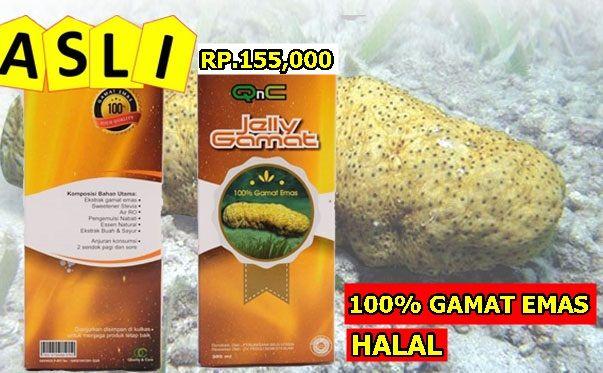 Jelly Gamat Untuk Obat Apa Saja