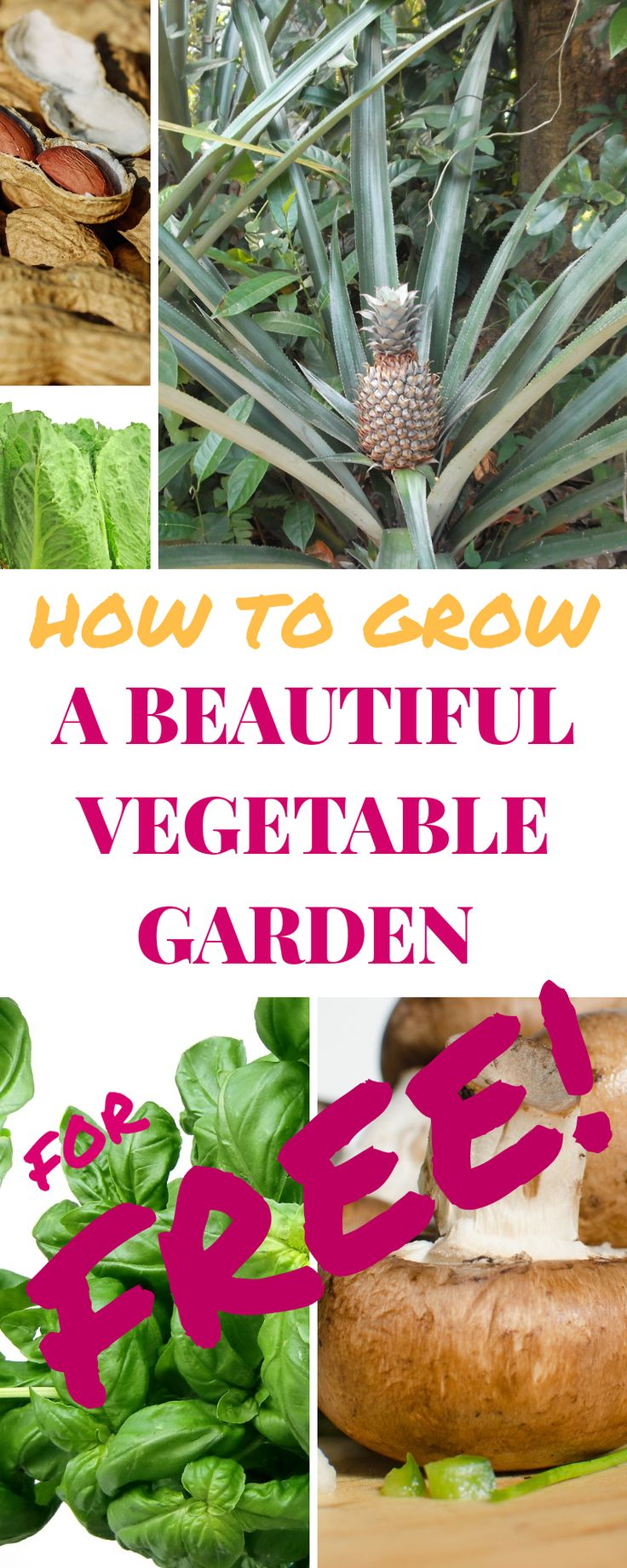 How ToCreate A Beautiful Vegetable Garden For FREE. If you take a minute and think you can use most of those little bits you throw away to benefit you and your family. I don't just mean using up your left over, although this is a great idea too. All you need to do is...
