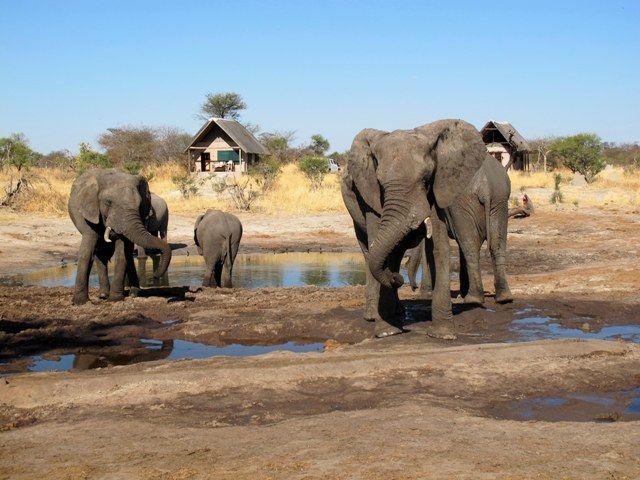 Safari Australe Ovest #3: in volo sul delta dell'Okavango