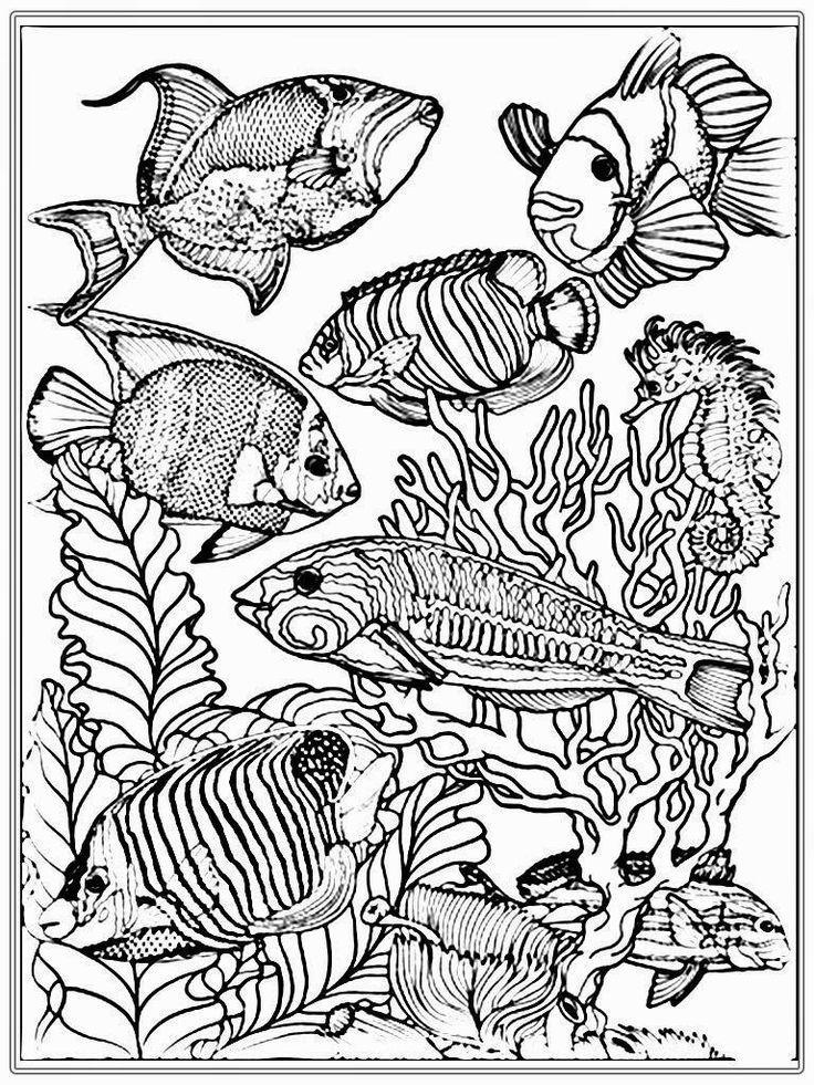 Pin On Fisch Krafts Ideen